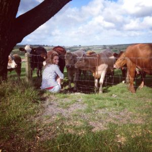 cornwall-with-cows-at-the-farm-a-wilder-life